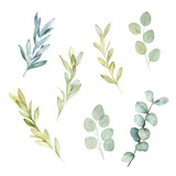 Watercolor greenery set. Botanical winter illustration with eucalyptus branch. Vintage hand drawn plant - 233507684