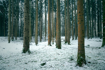 Cold and snowy winter in conifer tree forest landscape. © robsonphoto