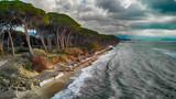 Beautiful pinewood along the sea, overhead aerial view - 233541044