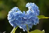 niebieskie serce - 233557036