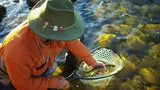 Fisherman with catch in keep net freshwater river USA - 233560069