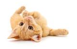Small brown kitten. © olhastock