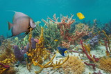 Colorful marine life in a reef of the Caribbean sea, sponges and tropical fish