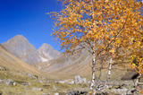 yellow foliage of trees in alpine valley under blue sky