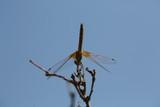 fotografias de insectos varios  - 233586657
