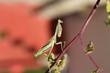 fotografias de insectos varios