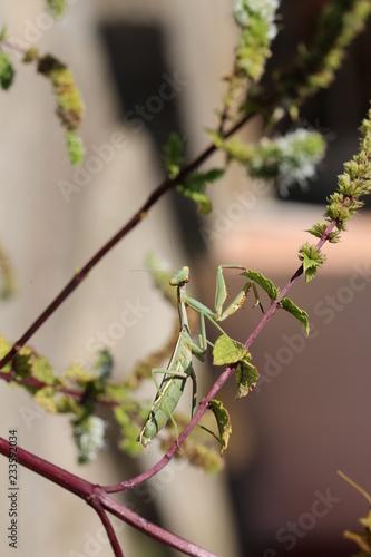 Foto Murales fotografias de insectos varios
