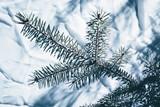 Christmas background. Green fir tree. - 233595891