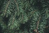 Christmas background. Green fir tree. - 233596086