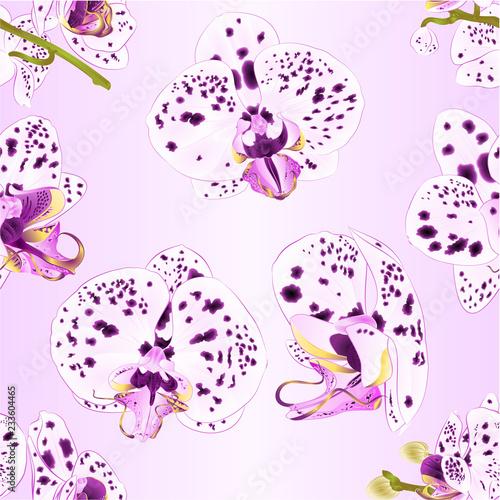 Bez szwu tekstury Storczyki Phalaenopsis z fioletowymi i białymi kropkami zbliżenie piękny kwiat na białym tle vintage ilustracji wektorowych edytowalne ręcznie narysować