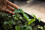 Examining seedling in soil - 233618840