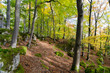 canvas print picture - Wald im Frühling