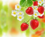 summer sweet garden fresh  strawberries