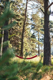 Hammock in the woods - 233704475