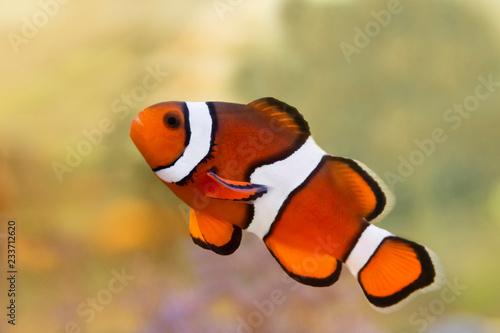 fototapeta na ścianę saltwater fish aquarium coral