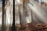 Herbstlicher Wald - 233734466