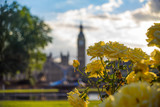 Yellow Roses with the Big Ben on the background © dilocom