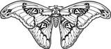 Butterfly art nouveau