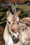 Le cheval est punk - 233771228