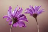 Fioletowe kwiaty - 233787069