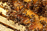 Pests in beehive