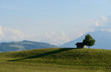 Lonely house shelter cabin and tree in top of a hill in Switzerland - 233914075