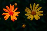 Flores de diferentes colores - 233917033