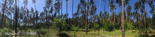 reeds in lake - 233918801