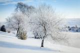 Winter scene in Central Kentucky - 233938060