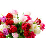 Quadro Bouquet of fresh tulips flowers close up isolated on white background