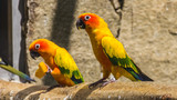 Beautiful parrot portrait