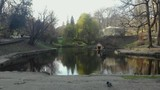 A house for swans on a lake in a park in the city of Lviv Ukraine - 233984256