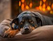 dog laying by the fireplace