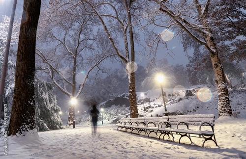 Winter landscape in Central Park. New York City. USA © Byelikova Oksana