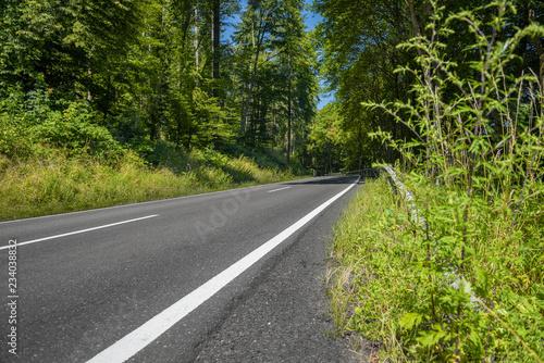 landstraße im pfälzer wald 3