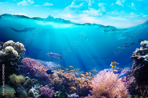 Underwater view of the coral reef.