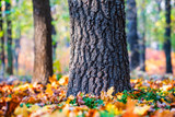 closeup tree in the autumn forest - 234050285