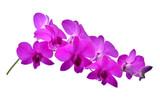 beautiful purple Phalaenopsis orchid flowers, isolated on white background © SAKORN