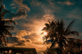 Palm trees silhouette against dramatic dark blue and orange sunset. Filter toned effect, vibrant colors. Copy space - 234089261