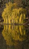 Herbstfarben - 234096834
