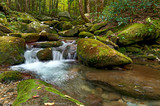 Green Moss Creek - 234103832