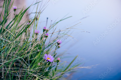 Wild flower on rock - 234158407
