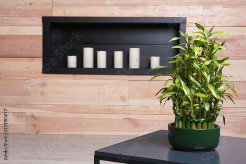 Pot with green bamboo on table in room. Space for text