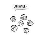 Spice collection, coriander seed hand drawn - 234223452