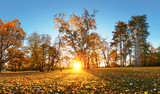Beautiful park garden in atumn. Fall panorama in park at sunrise in Slovakia - 234228270