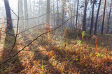 Fragment of autumn forest with spider web on a foreground