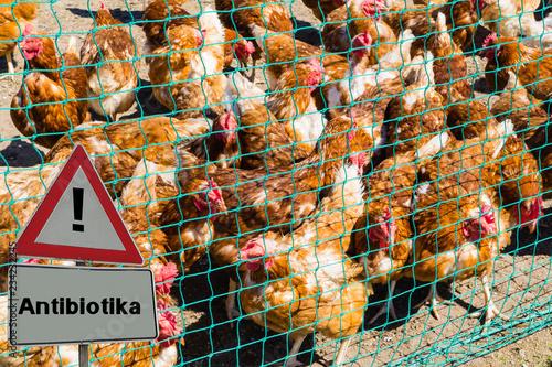 Leinwanddruck Bild Antibiotika Hühner