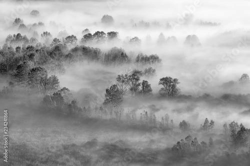 fototapeta na ścianę Nebbia sulla foresta, Italia