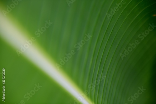 Green palm leaf textures and patterns in Colombia / South America