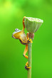 green tree frog climb to reach the top